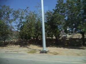 Pohon Mimba